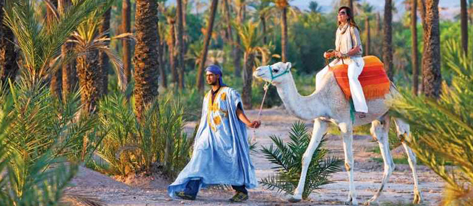 Camel Rides in Marrakech